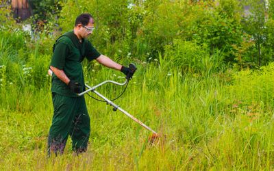 How to Hire a Reliable Weed Control Professional